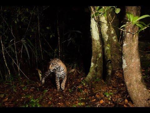Nature & Wildlife Photography Advice & Tips   Florian Schulz