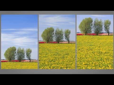 Rule of Thirds : You Keep Shooting with Bryan Peterson: Adorama Photography TV