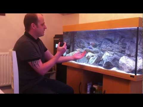 How to take Better Pictures of Fish in an Aquarium – Beginner Level