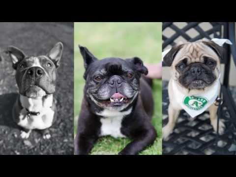 Creative Live Pet Photog